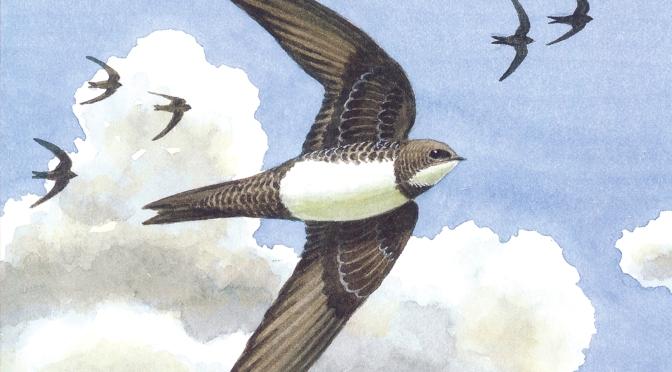 Cover Birds